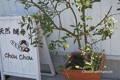 コトリノウタ&Chou  Chou.JPG