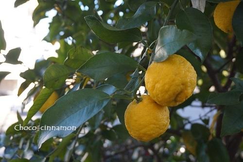 柚子の木.JPG