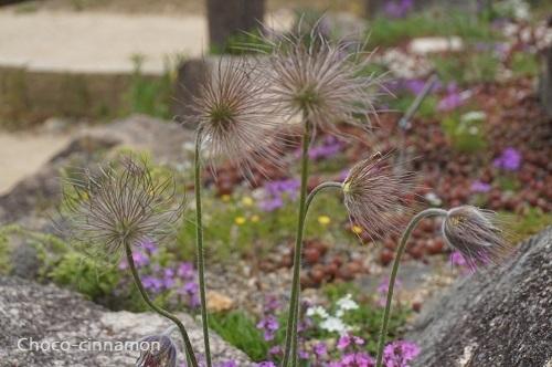 高山植物.JPG